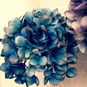 造花も区別つかないくらいキレイなアジサイ